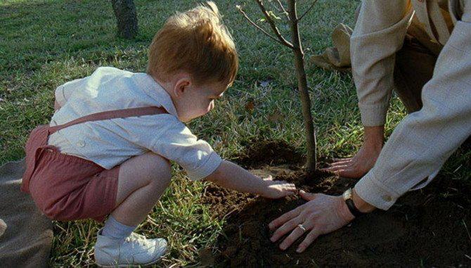 cinemanet   el árbol de la vida