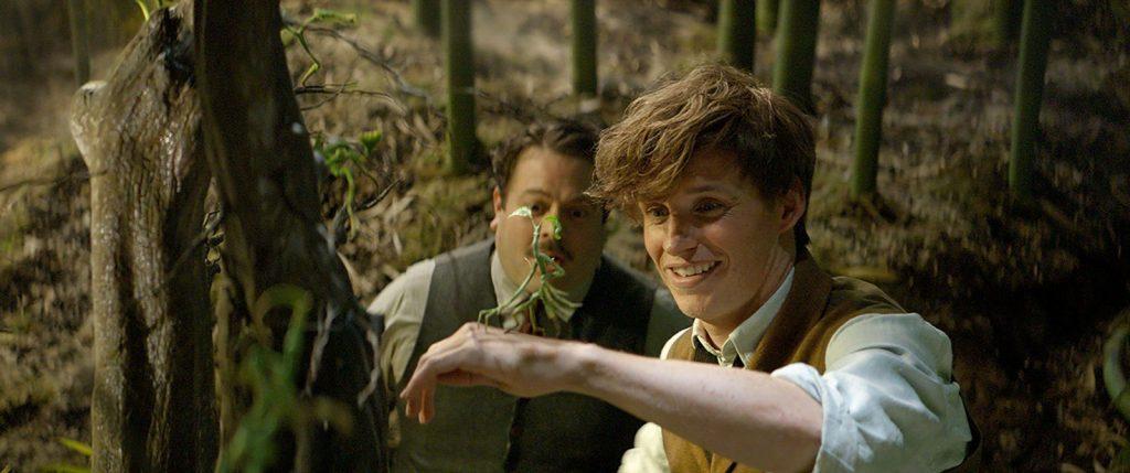 CinemaNet Animales fantásticos y dónde encontrarlos Harry Potter
